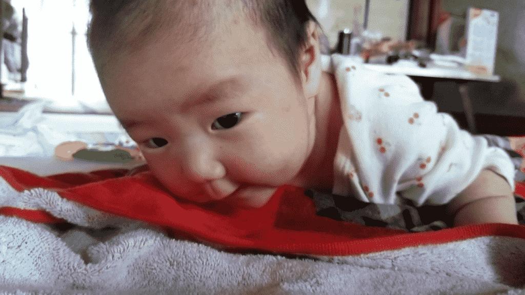 蚊 赤ちゃん