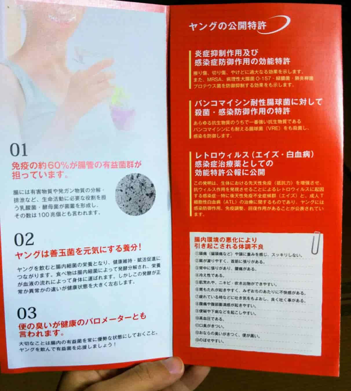 乳酸菌ヤング 説明3