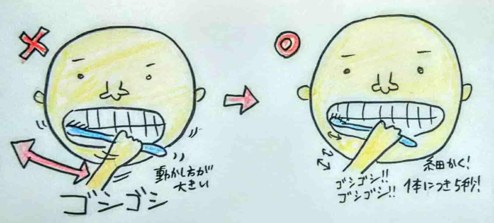 正しい歯磨きの仕方②