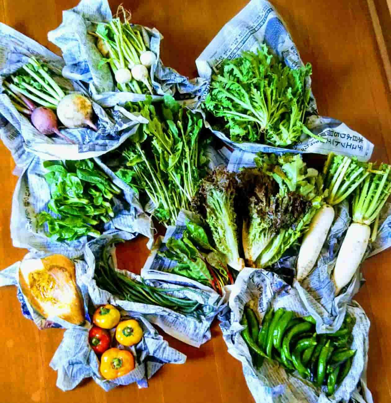 farmroots野菜宅配中身